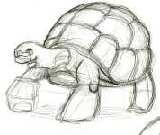 tortoise_sketch_by_cloud61587-d3ctjdk